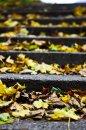 Fotografia: jesen je len starobou leta, fotograf: František Ivanko, tagy: listie, jesen, schody