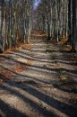 Fotografia: Lesná cestička smerom na Kľak, fotograf: Damián Macho, tagy: Línie, Príroda, Svetlo