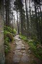 Fotografia: cesta na zbojnícku chatu, fotograf: Martin Husla, tagy: jar,les,cesta,príroda,hory