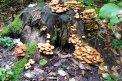 Fotografia: Aj hríby menia farebnosť lesa., fotograf: Lýdia Šimková, tagy: príroda, peň, hríby