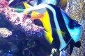Fotografia: Aj ryba je stopa života, fotograf: Martin Boškovič, tagy: ryba,voda