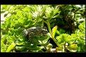Fotografia: manekyn, fotograf: David Urban, tagy: garfieldnagyur,david,urban,manekyn,zaba