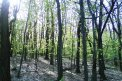 Fotografia: Cesta lesom, fotograf: David Durcak, tagy: les, jesen, prechadzka, pokoj