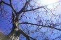 Fotografia: Strom, fotograf: David Durcak, tagy: strom, svetlo, nebo, obloha, konare