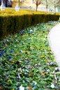 Fotografia: Obdobie tepla a krásny farieb , fotograf: Igor Kollárovics, tagy: Kvietky