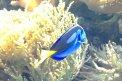 Fotografia: Rybička tiež je stopou života , fotograf: Marianna Poláková, tagy: ryba, voda