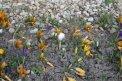 Fotografia: Kvety, fotograf: Henrich Wiedermann, tagy: ...