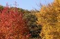 Fotografia: Stromy na jesen, fotograf: Martina Kukučková, tagy: stromy, listy, konare