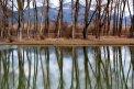 Fotografia: Odraz, fotograf: Martina Kukucová, tagy: jazero,stromy