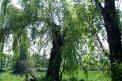 Fotografia: zelen, fotograf: Teofecu Naudius, tagy: nt