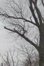 Fotografia: konar stromu, fotograf: Tomáš Stadničár, tagy: priroda