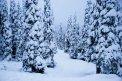 Fotografia: Laponsko, fotograf: Filip Tuhý, tagy: Laponsko
