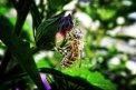 Fotografia: Opeľovanie je dôležitým faktorom života Zeme. , fotograf: Daniel Stehlík, tagy: opeľovanie, život, zem, včelička