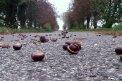 Fotografia: Cesta do neznáma., fotograf: Peter  Silný, tagy: gaštany, stromy, cesta