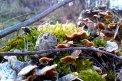 Fotografia: Hríbiky v lese., fotograf: Peter  Hudeček, tagy: hríby