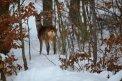 Fotografia: Zimný návštevník, fotograf: Kristína Jelžová, tagy: -