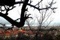 Fotografia: Pohľad na strechy mesta, fotograf: Peter  Silný, tagy: mesto, strechy, konár
