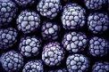 Fotografia: Č E R N I CE, fotograf: Denis Goga, tagy: černice, ovocie, čierna, mráz, tapeta