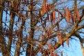 Fotografia: aj v zime je príroda farebná..., fotograf: Michal  Turcár, tagy: zima, strom
