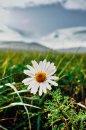 Fotografia: Kvietok, fotograf: Jakub Manina, tagy: #lúka#kvet#príroda#jar