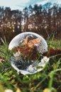 Fotografia: Listy v bubline, fotograf: Jakub Manina, tagy: bublina, tráva, priroda, listy